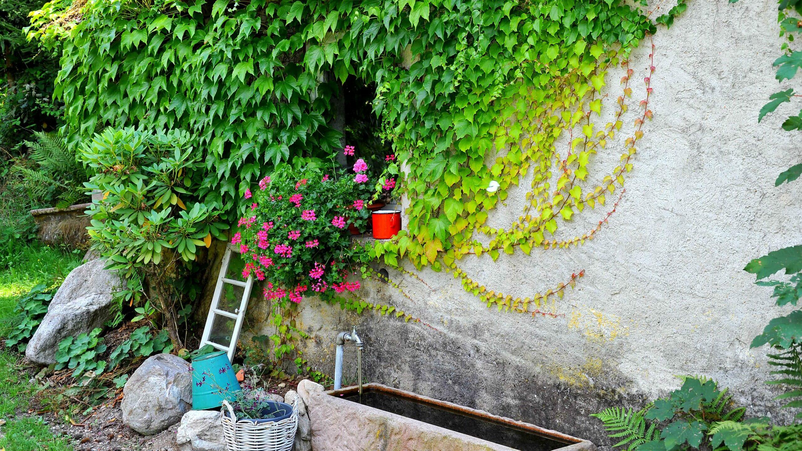 Brunnen mit efeubewachsener Wand