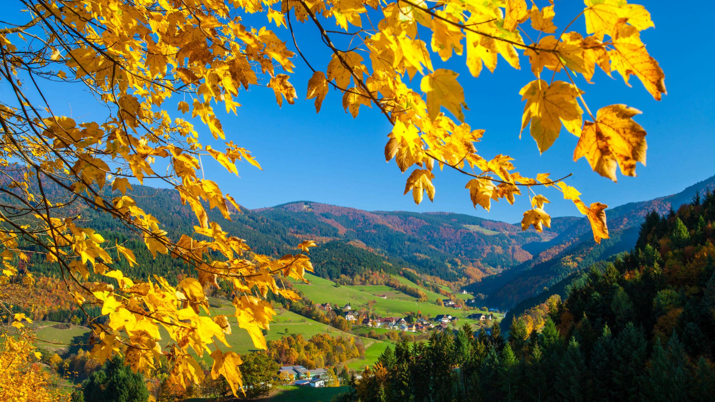 Blick ins Tal durch goldgelbe Herbsblätter